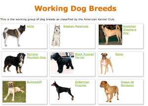 Working Dogs | Ms. Erna's Technology Lab